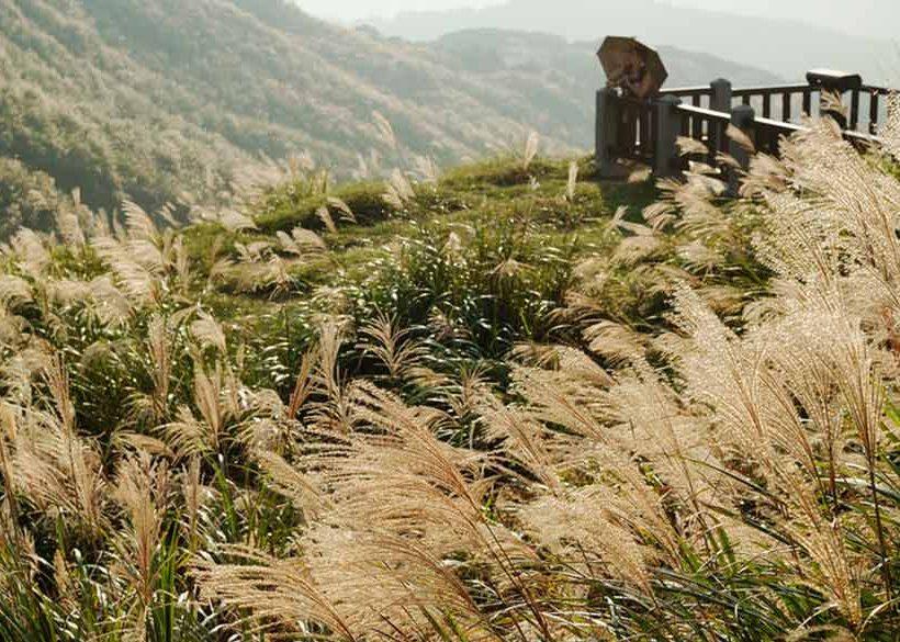 【陽明山芒花季 】秋季限定陽明山私房景點、人氣美食大公開!