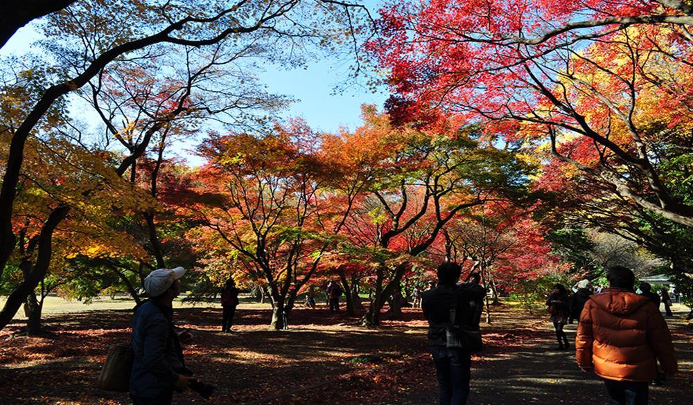新宿御苑楓葉景象