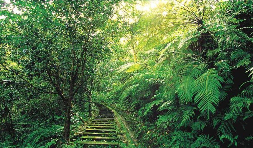 大板根森林溫泉渡假村