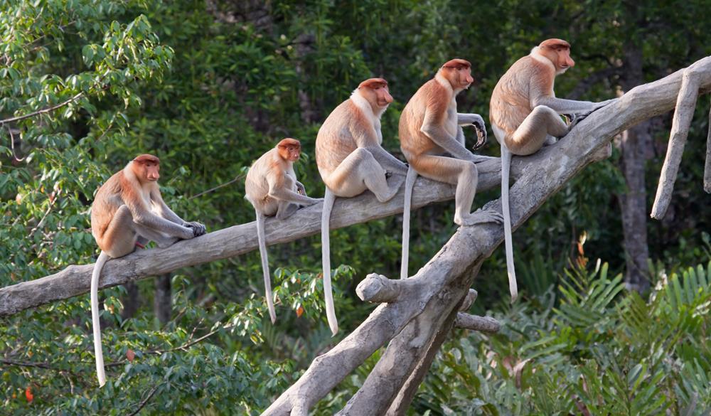 Kawa Kawa紅樹林生態區