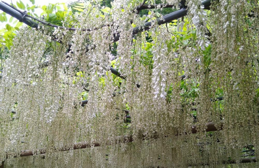 關西|曼陀羅寺公園