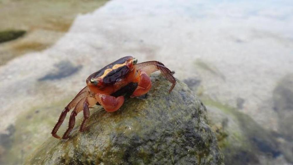 綠島護蟹任務