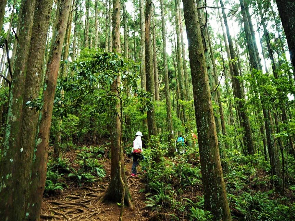 新竹-景點-觀霧休憩區步道