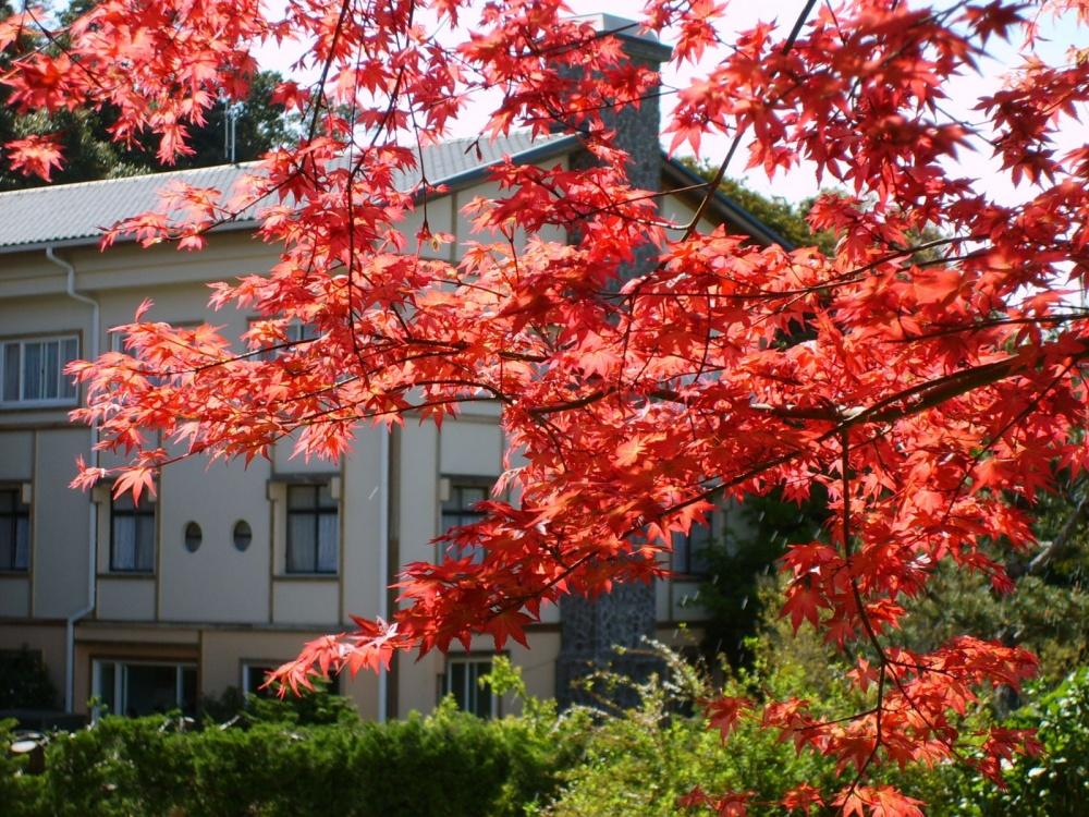 新竹-景點-野馬瞰山步道楓葉
