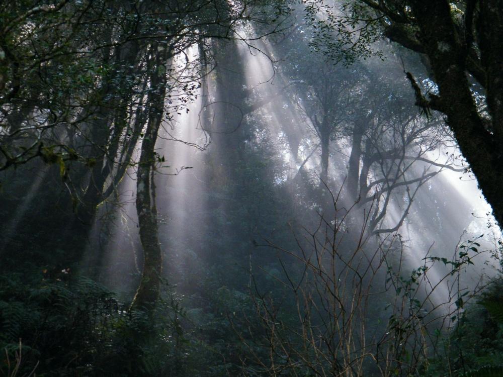 新竹-景點-野馬瞰山步道雲海