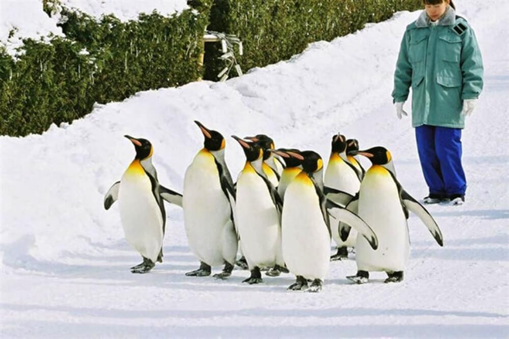 2020-春節旅遊-日本-北海道-旭山動物園