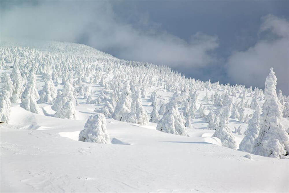 2020-春節旅遊-日本-東北山形藏王樹冰