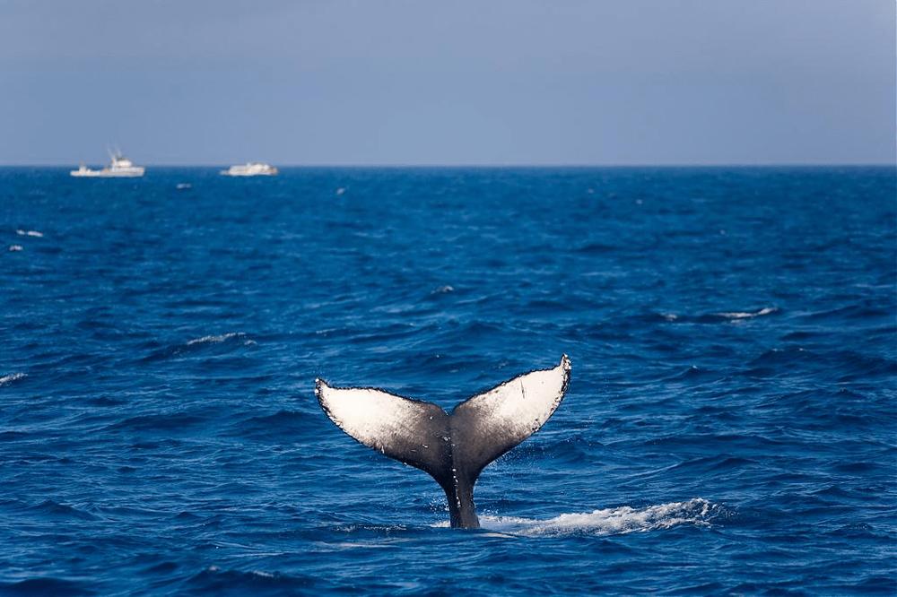 沖繩冬天-賞鯨