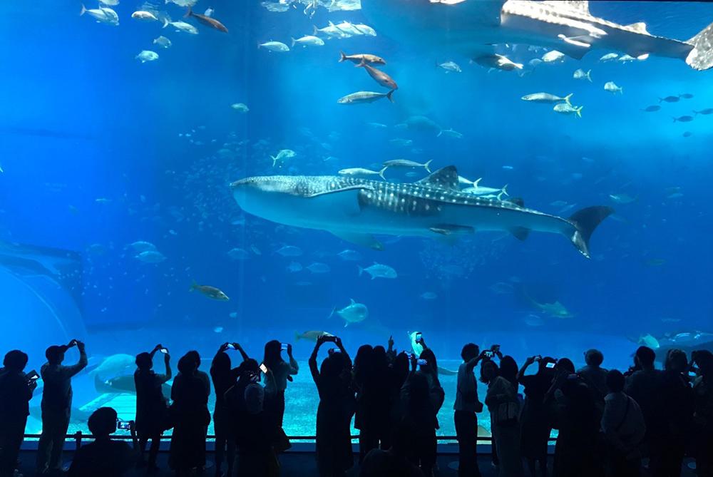 沖繩-古宇利島-水族館