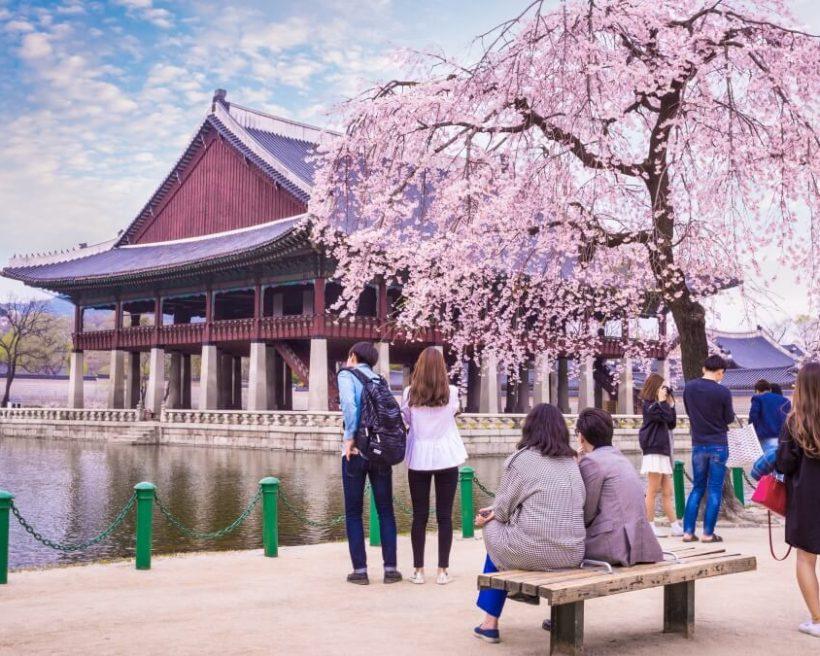 【2020首爾櫻花住宿】汝矣島、南山公園、石村湖…首爾賞櫻人氣住宿推薦!