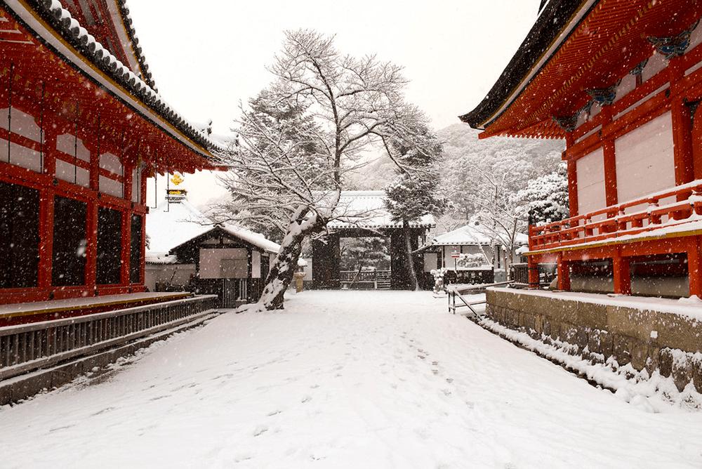 京都-賞雪-清水寺
