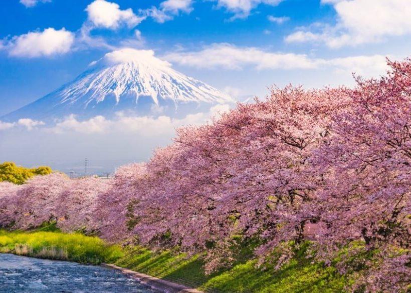【2020日本賞櫻】盤點日本6處最美賞櫻地點+開花&盛開花期預測
