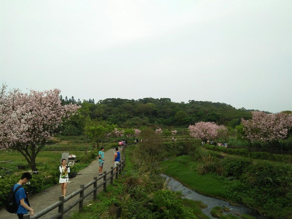台北賞櫻景點-三芝三生步道