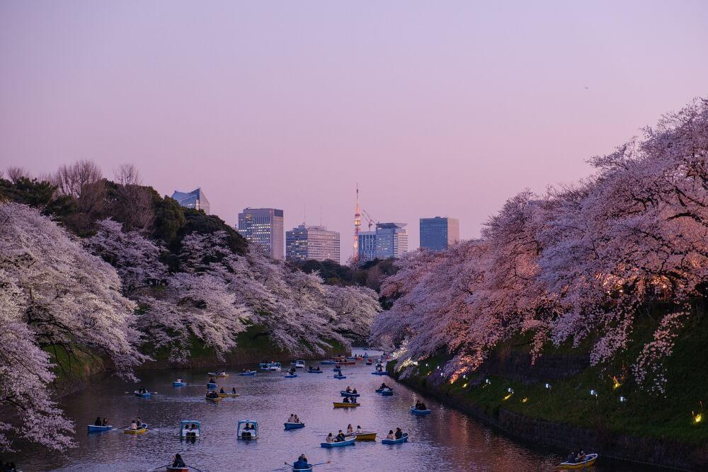 東京賞櫻-千鳥ヶ淵