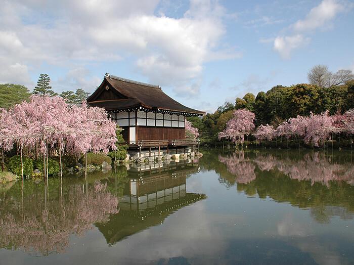 京都賞櫻景點-平安神宮