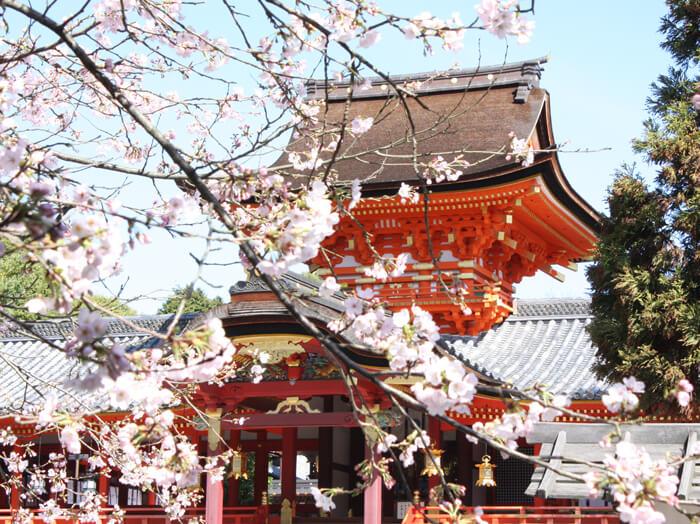 京都櫻花-石清水八幡宮