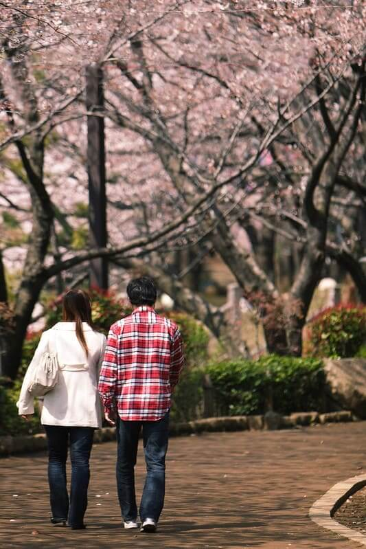 東京賞櫻-飛鳥山公園