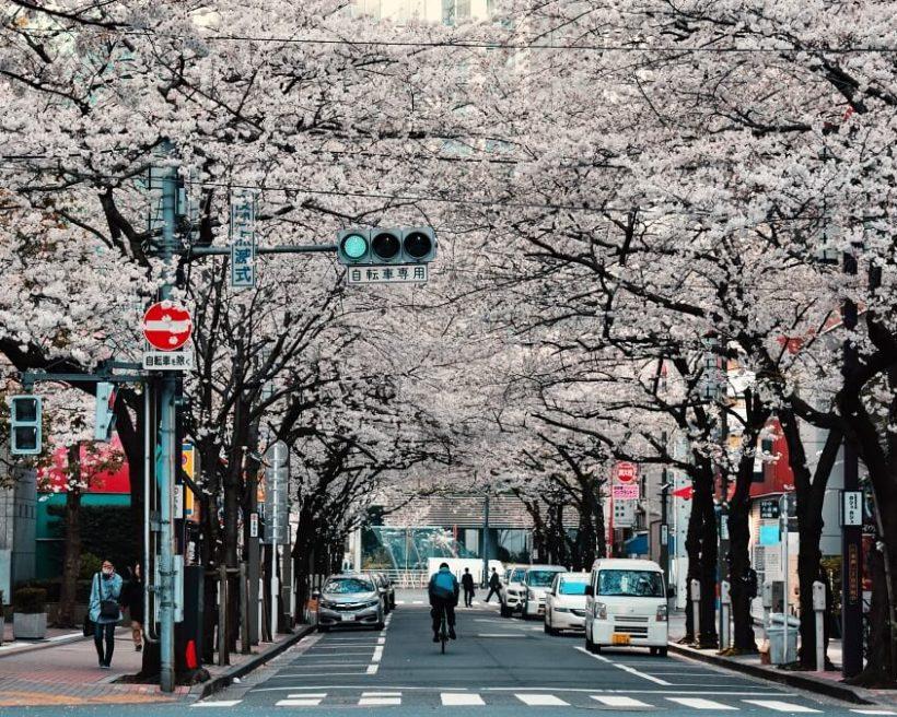 【2020東京櫻花】10大賞櫻入門景點、滿開日預測最前線情報總整理