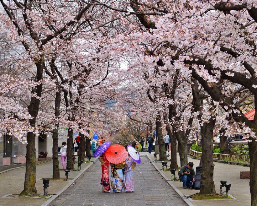 【2020京都櫻花】top10京都櫻花景點、賞櫻情報(持續更新中)