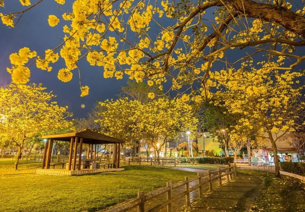 風鈴木景點-台中廍子公園