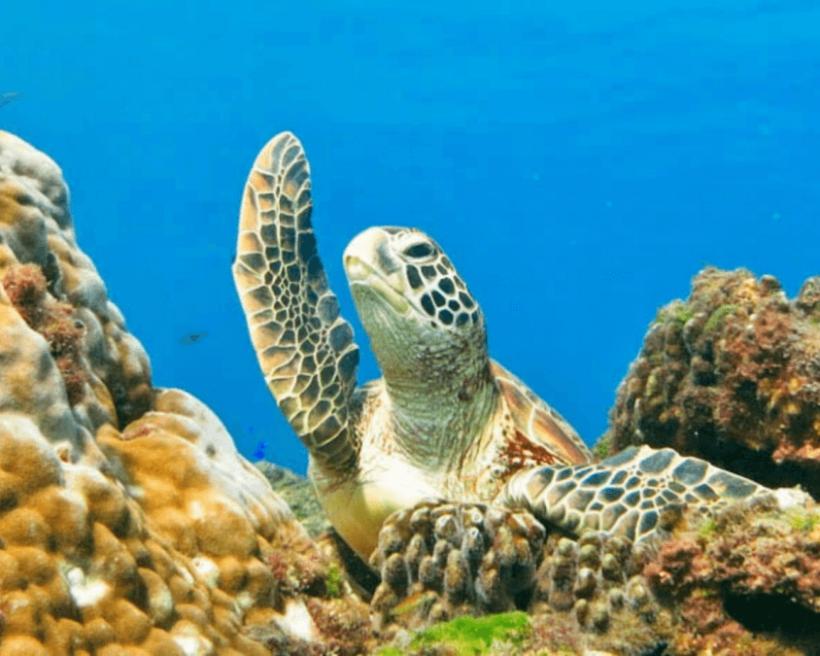 【台灣潛水地點】全台十大潛水點攻略,墾丁、綠島、蘭嶼、琉球潛水趣!