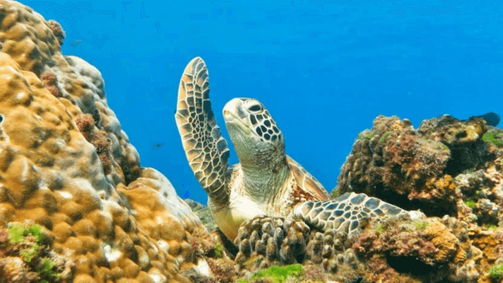 台灣潛水地點-小琉球龍蝦洞