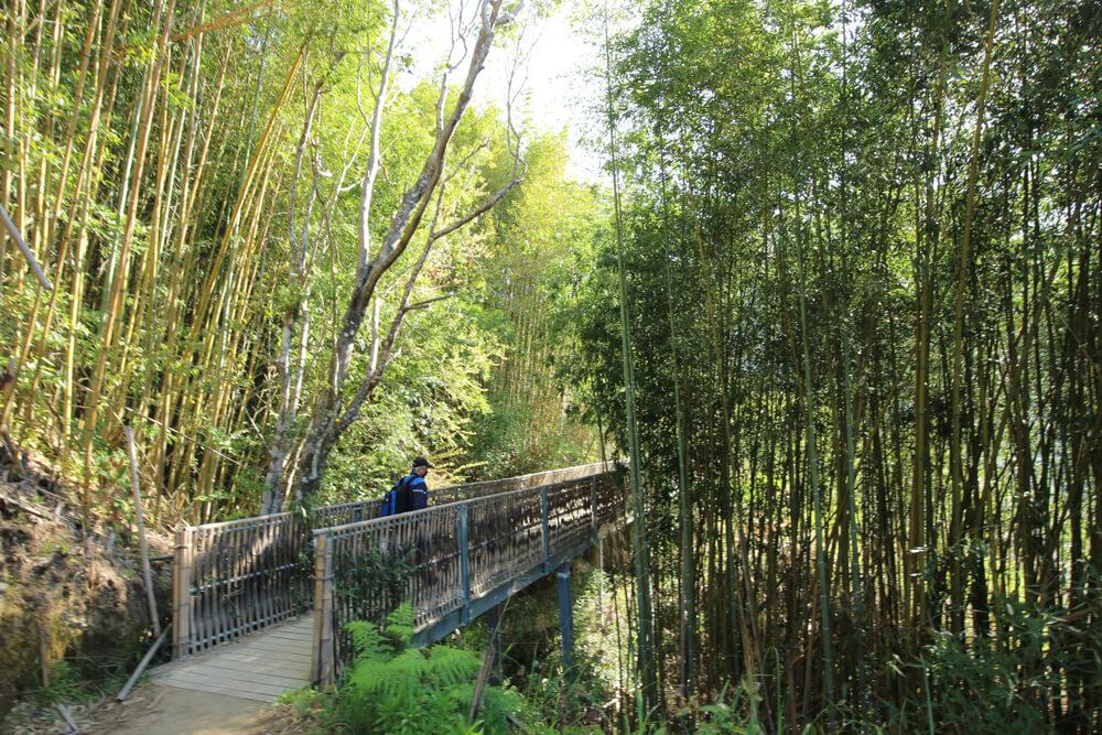 司馬庫斯-桂竹林步道