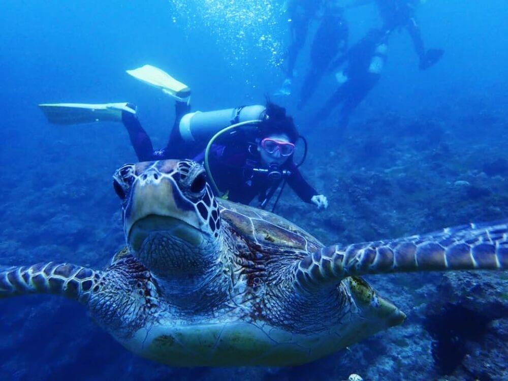小琉球-潛水海龜