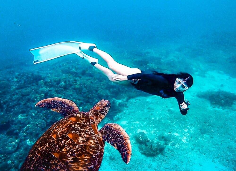 小琉球景點-潛水海龜