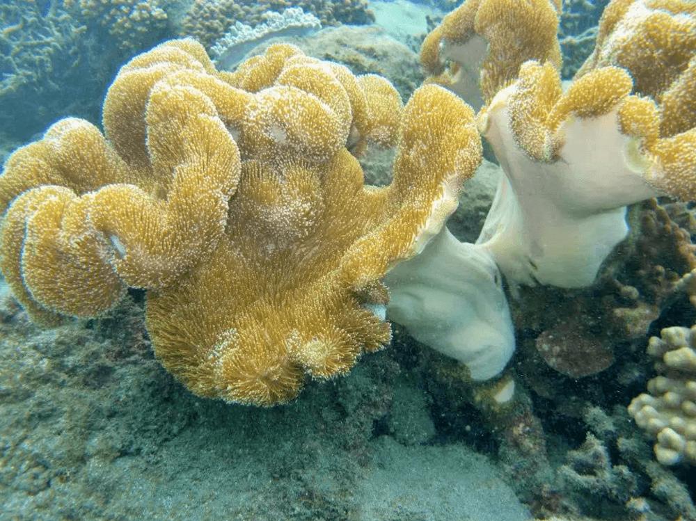 台灣潛水-澎湖七美島