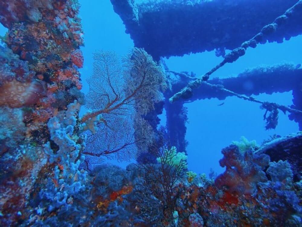 台灣潛水-綠島鋼鐵礁