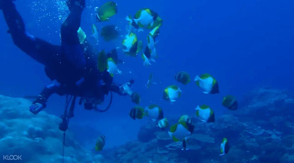 台灣潛水地點-綠島
