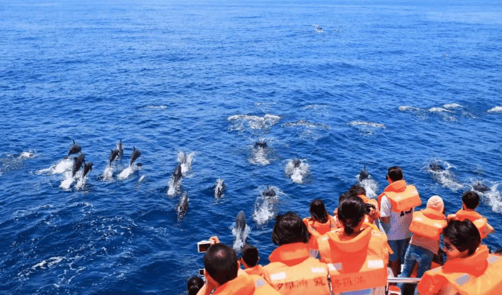 蘇花改兩日遊-花蓮賞鯨體驗