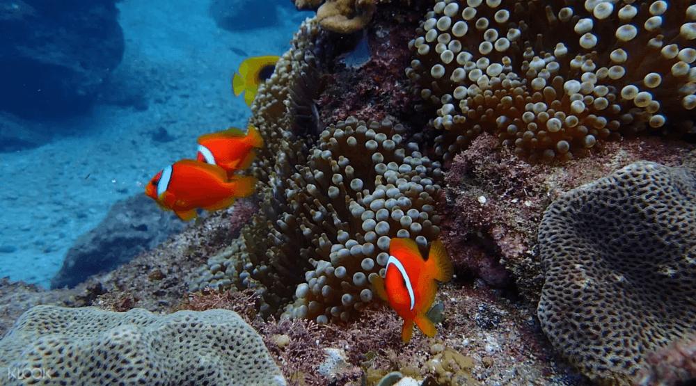台灣潛水地點-蘭嶼