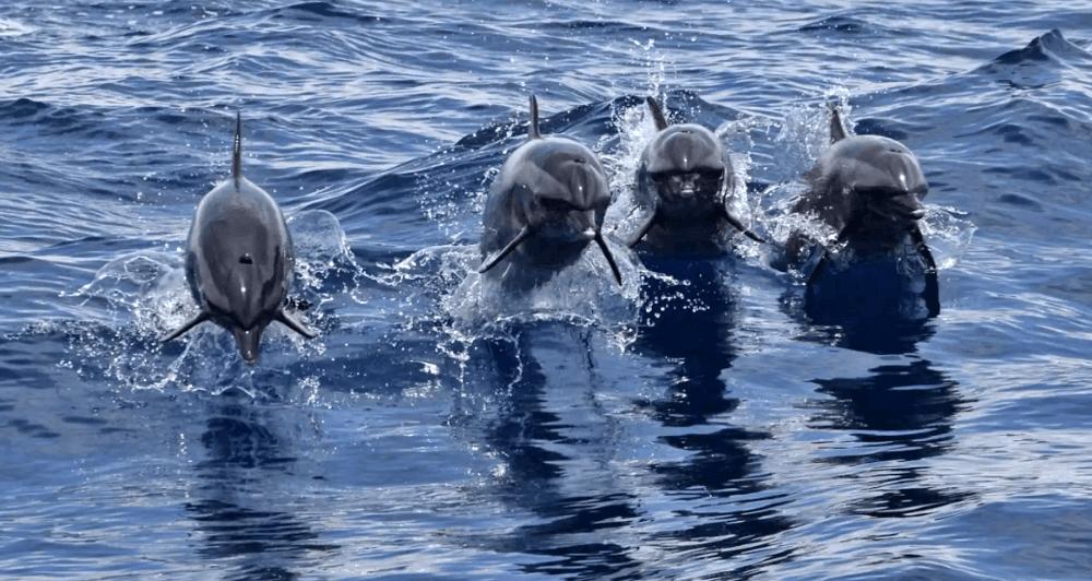 花蓮賞鯨體驗
