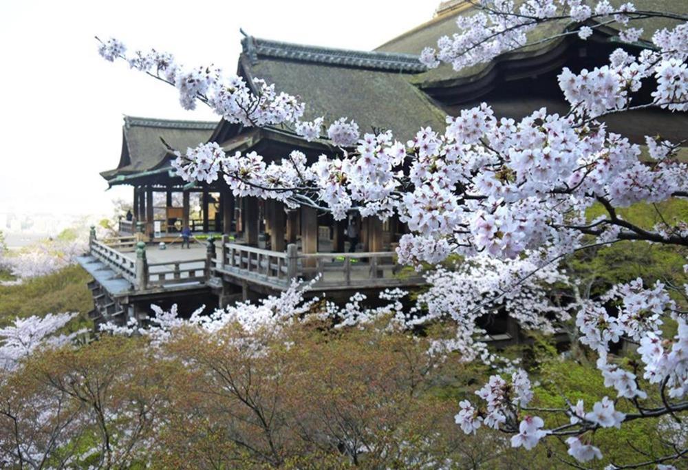 清水寺-櫻花