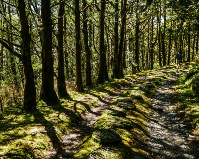 【宜蘭步道】到宜蘭森呼吸!9條宜蘭森林步道全攻略