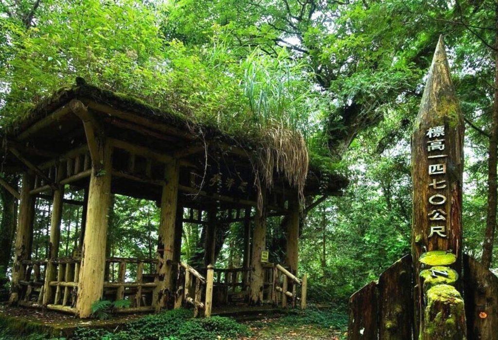 宜蘭步道-棲蘭神木園步道