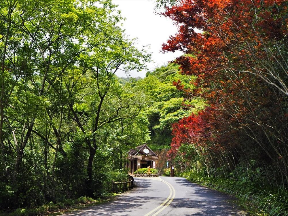 太平山周邊景點-棲蘭神木園
