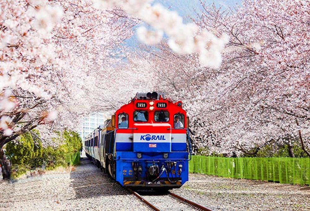 2021-連假-韓國櫻花-慶和站櫻花道