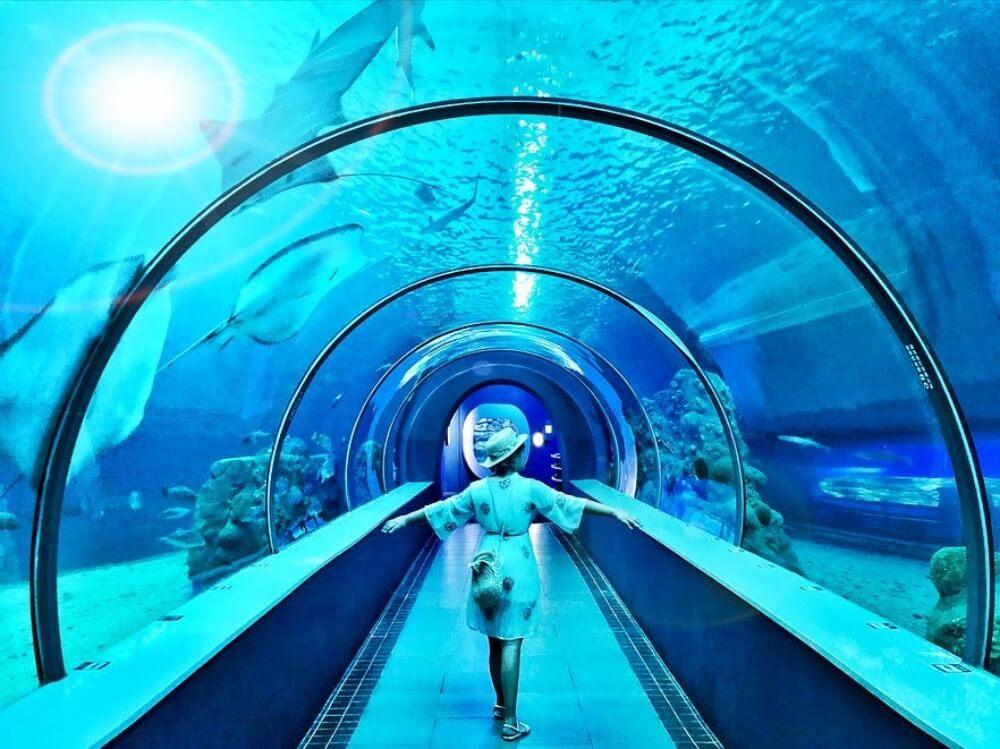 澎湖景點2020-澎湖水族館