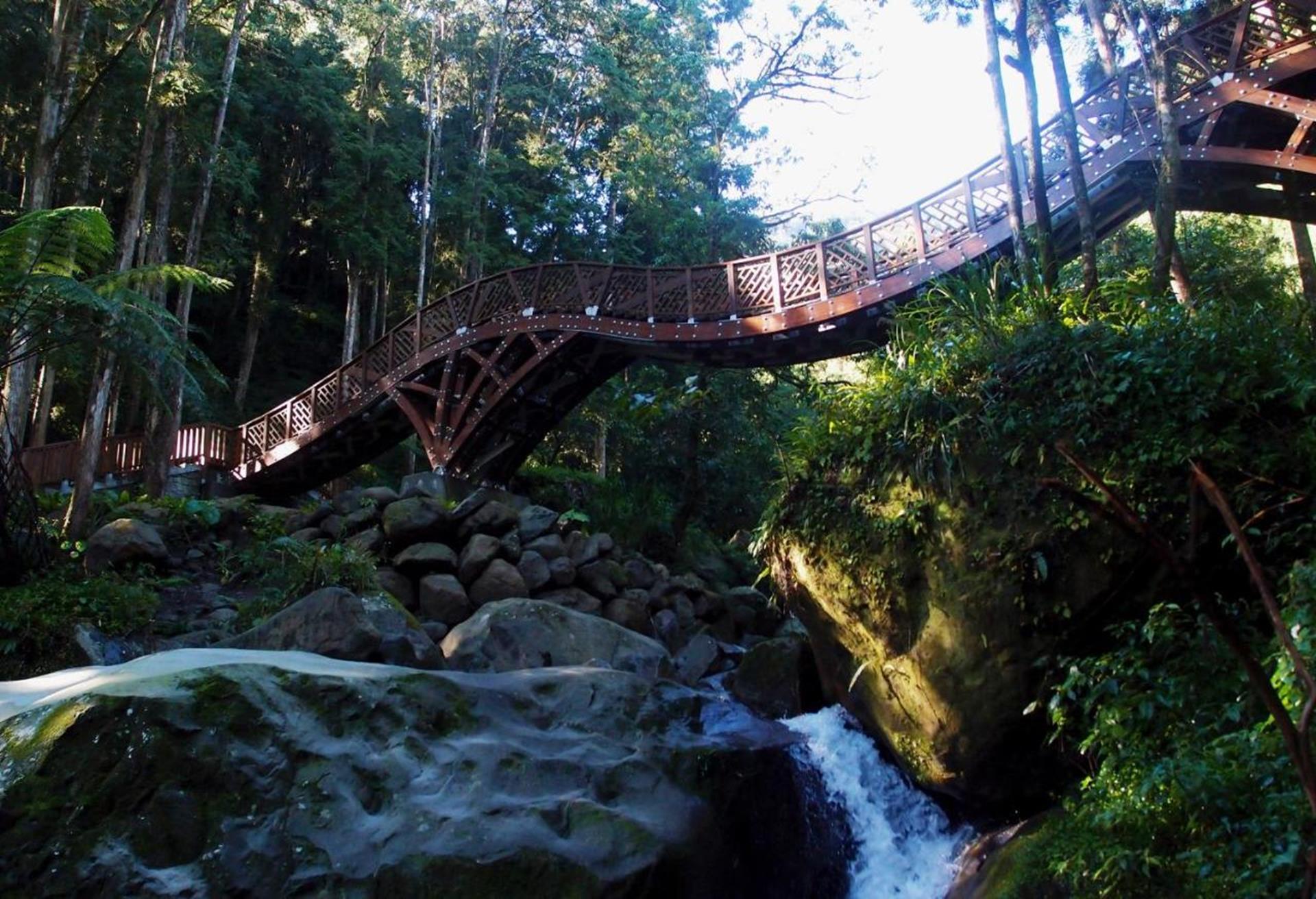 溪頭渡假飯店推薦 - 孟宗山莊大飯店周邊充滿森林綠意